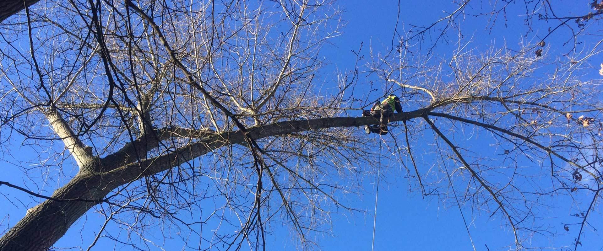 Fällung von Bäumen in großen Höhen