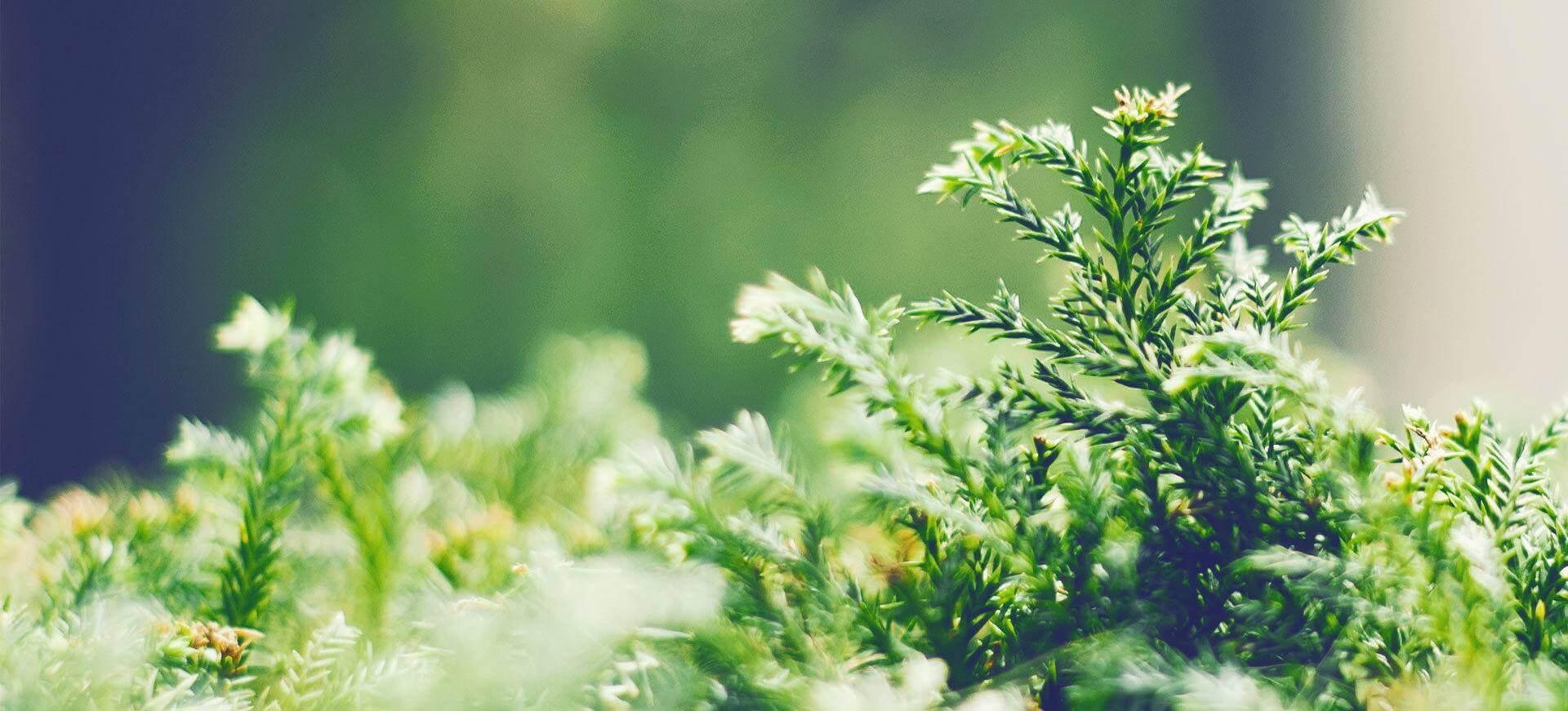Pflege ihrer Grünanlagen durch Spezialisten