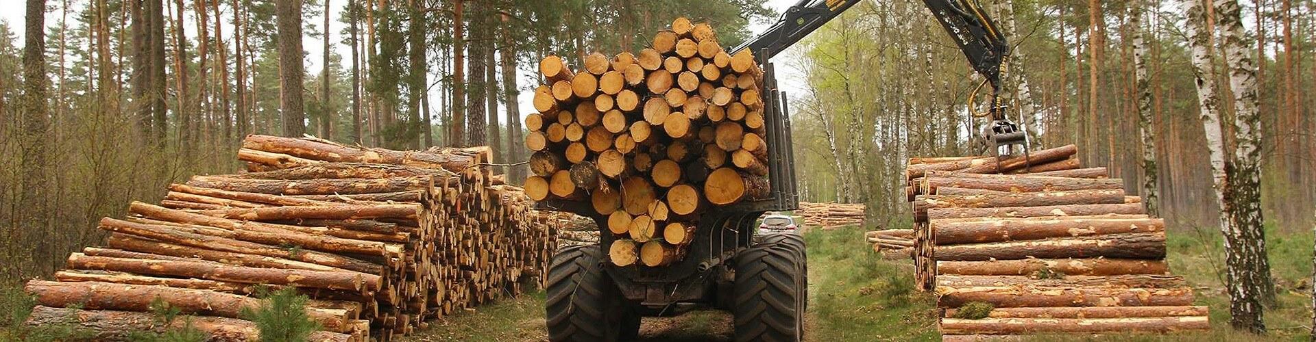 Baumpflege, Baumfällung und Sicherheitskontrollen