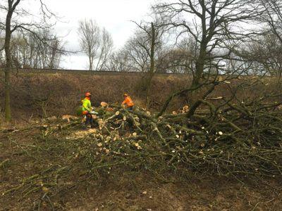 Rodung und Abholzung von Bäumen