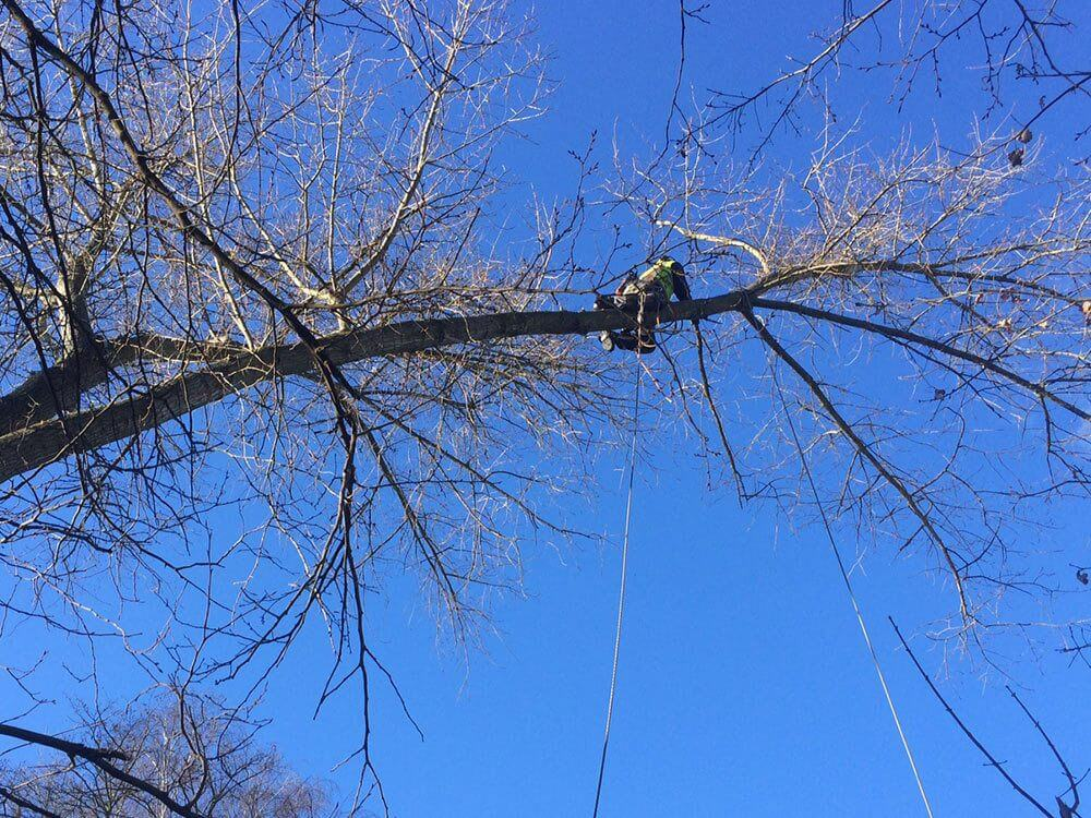 Verkleinerung von Bäumen in großer Höhe